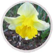 Daffodil On Verona Round Beach Towel