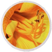 Daffodil - Peeping Tom 06 Round Beach Towel