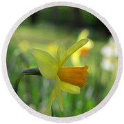 Daffodil Side Profile Round Beach Towel