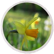Daffodil Side Profile Round Beach Towel