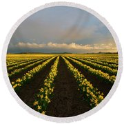Round Beach Towel featuring the photograph Daffodil Storm by Mike Dawson