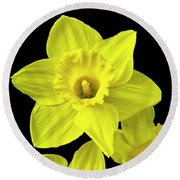 Round Beach Towel featuring the photograph Daffodils by Christina Rollo