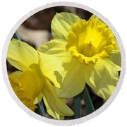 Daffodils In Spring Round Beach Towel by Sheila Brown