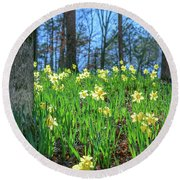 Daffodils On Hillside 2 Round Beach Towel