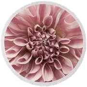 Dahlia Closeup In Rose Quartz Round Beach Towel