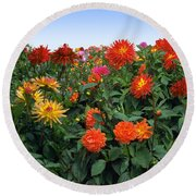 Dahlia Flower Panorama Round Beach Towel