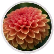 Round Beach Towel featuring the photograph Dahlia In Detail by Arlene Carmel