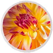 Dahlia Late Afternoon Radiance Round Beach Towel