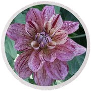 Round Beach Towel featuring the photograph Dahlia 'nonette' by Ann Jacobson