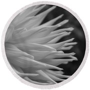 Dahlia Petals In Black And White Round Beach Towel