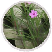 Round Beach Towel featuring the photograph Dainty Pink by Penny Lisowski