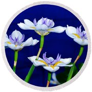 Dainty White Irises All In A Row Round Beach Towel