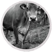 Dairy Cow Stowe Vermont Black And White Round Beach Towel
