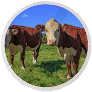 Cattle Andover New Hampshire Round Beach Towel