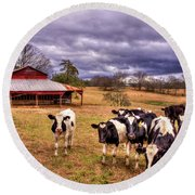 Dairy Heifer Groupies The Red Barn Art Round Beach Towel by Reid Callaway