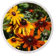 Round Beach Towel featuring the photograph Daisies by Donna Walsh