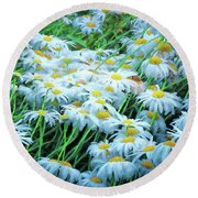 Round Beach Towel featuring the photograph Daisies Galore by Tom Singleton