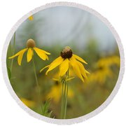 Daisies In The Mist Round Beach Towel by Maria Urso