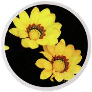 Round Beach Towel featuring the photograph Daisies Iv by Cassandra Buckley