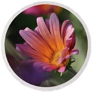 Round Beach Towel featuring the photograph Daisy At Dusk by Debby Pueschel