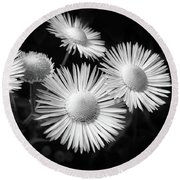 Round Beach Towel featuring the photograph Daisy Flowers Black And White by Christina Rollo