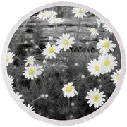 Round Beach Towel featuring the photograph Daisy Patch by Benanne Stiens