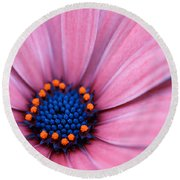 Round Beach Towel featuring the photograph Daisy by Rachel Mirror