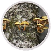 Round Beach Towel featuring the photograph Dance Around The Ancient Birch by Wayne King