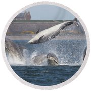 Dance Of The Dolphins Round Beach Towel