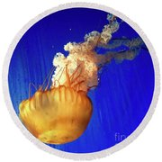 Dance Of The Jelly Round Beach Towel by Beth Saffer