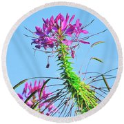 Round Beach Towel featuring the photograph Dancing Cleome by Debbie Stahre