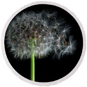 Round Beach Towel featuring the photograph Dandelion 3 by James Sage