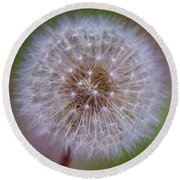 Dandelion Round Beach Towel by April Reppucci