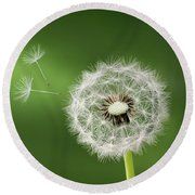 Round Beach Towel featuring the photograph Dandelion by Bess Hamiti