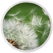 Round Beach Towel featuring the photograph Dandelion Blowing by Bess Hamiti