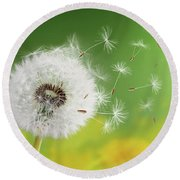 Round Beach Towel featuring the photograph Dandelion Clock In Morning by Bess Hamiti