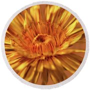 Dandelion Close #g3 Round Beach Towel