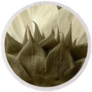 Round Beach Towel featuring the photograph Dandelion In Sepia by Micah May