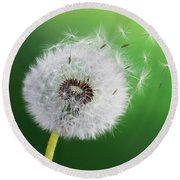 Round Beach Towel featuring the photograph Dandelion Seed by Bess Hamiti