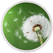 Round Beach Towel featuring the photograph Dandelion Seeds by Bess Hamiti