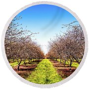 Round Beach Towel featuring the photograph Dandelion Stripes by Onyonet  Photo Studios