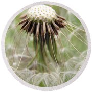 Dandelion Wish 8 Round Beach Towel