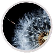 Round Beach Towel featuring the pyrography Dandy by Bess Hamiti