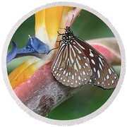 Round Beach Towel featuring the photograph Dark Blue Tiger Butterfly - 1 by Paul Gulliver