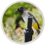 Round Beach Towel featuring the photograph Dark-capped Bulbul by Betty-Anne McDonald