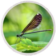 Round Beach Towel featuring the photograph Dark Damsel by Bill Pevlor