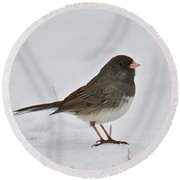 Dark-eyed Junco 1217 Round Beach Towel by Michael Peychich