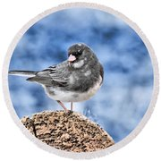 Round Beach Towel featuring the photograph Dark-eyed Junco by Debbie Stahre