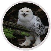 Dark Forest Snowy Owl Round Beach Towel