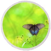 Round Beach Towel featuring the photograph Dark Morph Female Tiger Swallowtail Butterfly by Lori Coleman